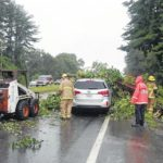 Tree falls on vehicle; minor injuries reported